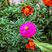 Pastel Wild Flowers Poster
