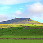 Penyghent In Yorkshire Dales National Park North Yorkshire Poster