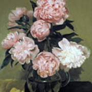 Peonies Front And Center Poster