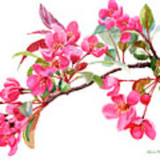 Pink Flowering Tree Blossoms Poster