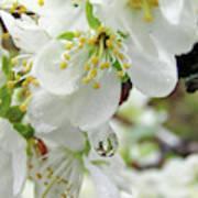 Plum Blossoms 2 Poster