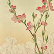 Plum Or Cherry Blossom Poster