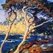 Point Lobos Trees 1919 Poster