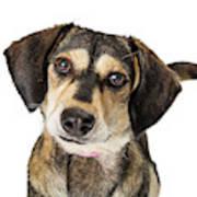 Portrait Cute Medium Size Crossbreed Dog Poster