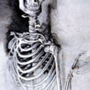 Portrait Of A Skeleton Poster