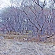 Prescott Arizona Watson Lake Bayou Trees Scrub Water Grasses 3142019 4916 Poster