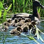 Proud Mother Duck Poster