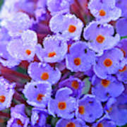 Purple Flowers In The Morning Dew Poster