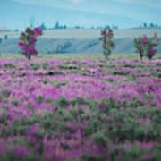 Purple Grain Poster