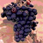 Purple Grape Bunches 18 Poster