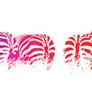 Rainbow Zebras Poster