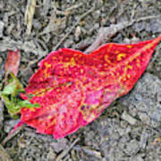 Red Leaf On Green's Hill Poster