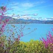 Redbud Beauty Along The Shore Of Shasta Lake Poster
