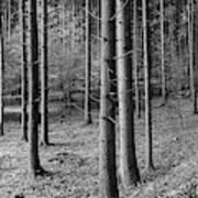 Road Passing Through Forest, Stuttgart Poster