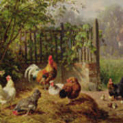 Rooster With Hens And Chicks Poster