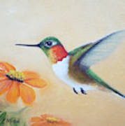 Rufous In Marigolds  Poster