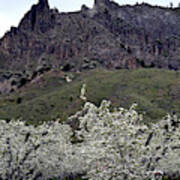 Saddle Rock And Apple Blooms Poster