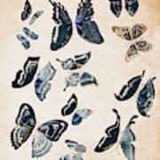 Scrapbook Butterflies Poster
