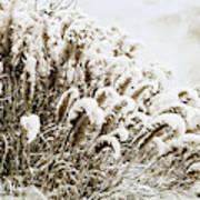 Sepia Snow Poster