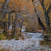 Serene Stream In Autumn Poster