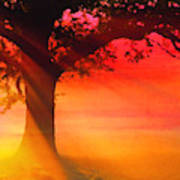 Shade Tree At Dawn Poster