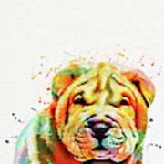 Shar Pei Dog Poster