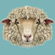 Sheep Portrait. Illustrated Portrait Of Poster