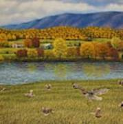 Shenandoah Valley Hawk Poster