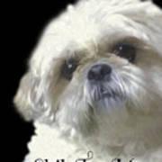 Shih Tzu For Mom-bubba Poster