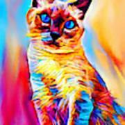 Siamese Cat Poster