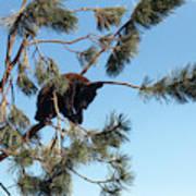 Sleeping Bear Cub Poster