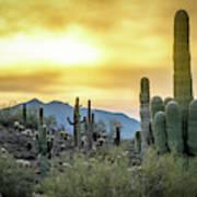 Sonoran Sunrise Poster
