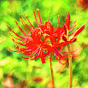Spider Lily Cezanne Poster