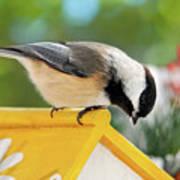 Spring Chickadee Poster