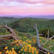Spring Sunset Poster