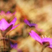 Spring Wild Flower 4 Poster