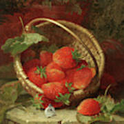 Still Life Of Strawberries With A Cabbage White Butterfly Poster