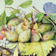 Still Life With Plums, Walnuts And Jasmine Poster