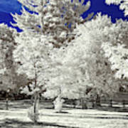 Summer Park In Infrared Poster
