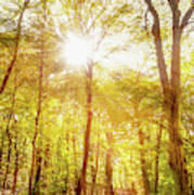 Sunbeams In The Forest Poster