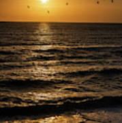 Sunrise Birds North Carolina Poster