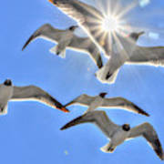 Sunshine And Seagulls Poster