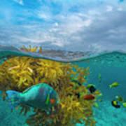 Surf Parrotfish, Damselfish And Basslet Poster