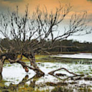 Swamp And Dead Tree Poster