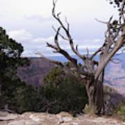 Swirly Tree Poster