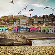 Terns And Colorful Houses On Capitola Poster