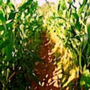 The Corn Maze #2 Poster