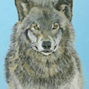Timber Wolf 4 Poster