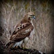 Totem Animal Book Hawk Poster