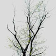 Tree Series Five Poster